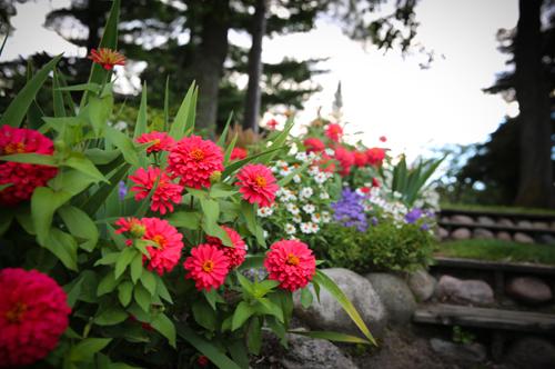 Gallery Image Flowers_at_Half_Moon_Trail_Resort.jpg