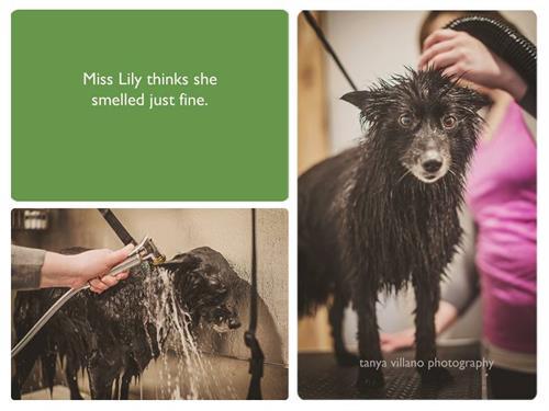 Dog Wash Customer