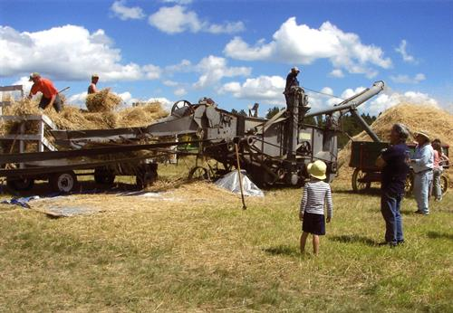 Threshing 2015 Field Days