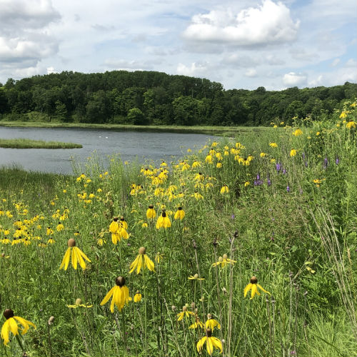 Tamarac Refuge is home to more than 25 lakes and 3 river systems.