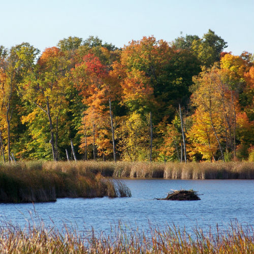 Tamarac Refuge is 43,000 acres of pristine photography opportunity.