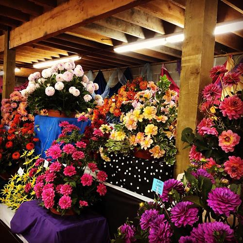 Indoor Display Room during Annual Dahlia Festival
