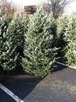 Christmas Tree Sales by the Vienna Optimist Club