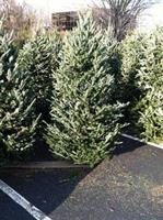 Christmas Tree Sale by the Vienna Optimist Club