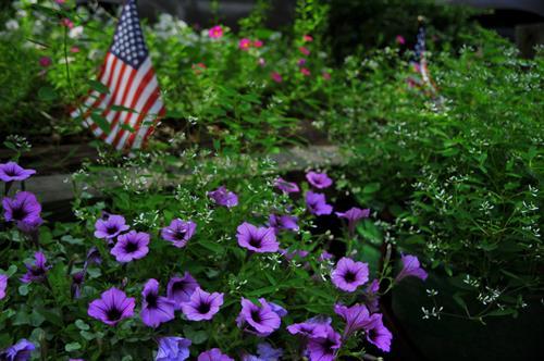 Gallery Image flowers_flag.jpg