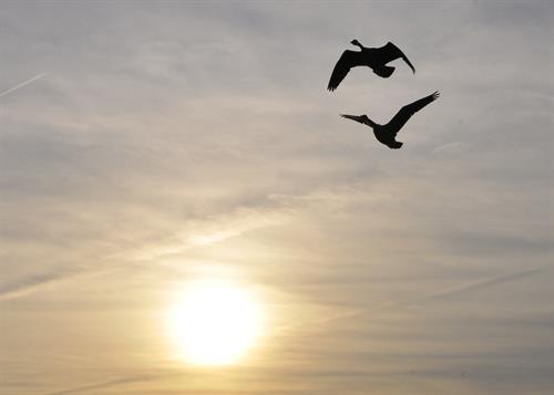 Gallery Image geese.jpg