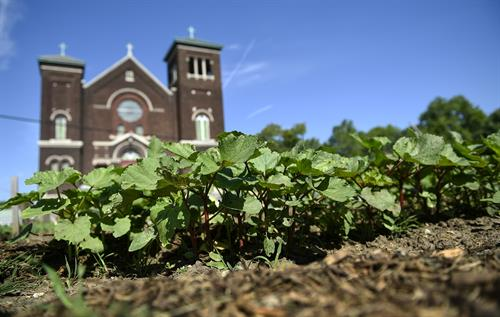 Cross-Lines offices are located in a former church in the Armourdale neighborhood in Kansas City, KS. The campus includes a community garden which provides fresh produce for the Food Pantry.
