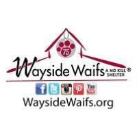 Wayside Waifs Breaks Ground on $8 Million Project