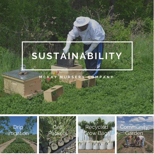 Gallery Image Sustainability.jpg