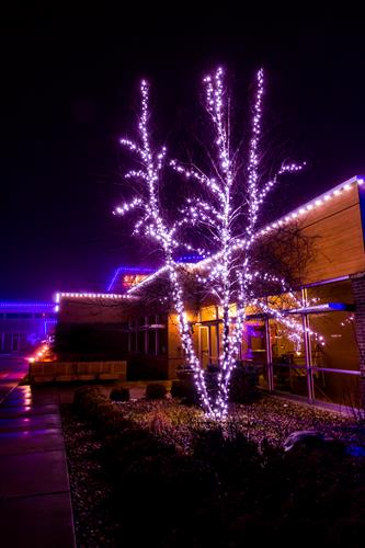 Tree Wraps - Holiday Lighting - Commercial