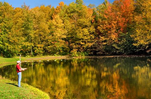 Gallery Image Pond-fall.jpg