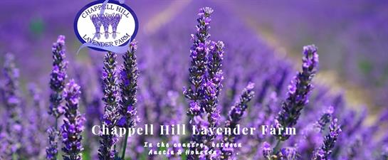 Chappell Hill Lavender Farm