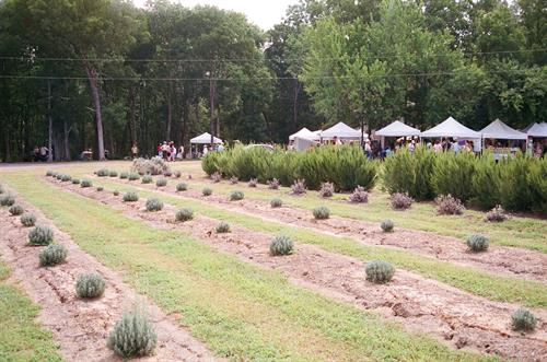 Vendors love lavender
