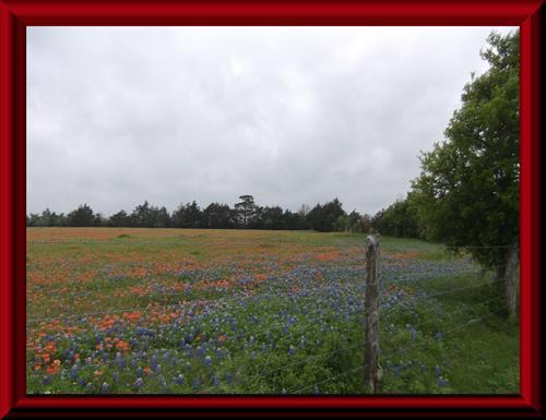 Elm Grove Farm