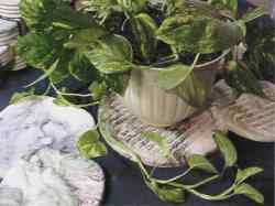 Put trivets under your plants to prevent damage to counters and floors