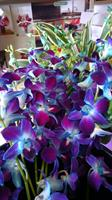Gallery Image blue_orchids.jpg