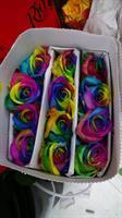 Gallery Image rainbow_roses_2.jpg