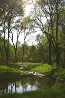 WSSI restored Snakeden Branch as part of the Northern Virginia Stream Restoration Bank