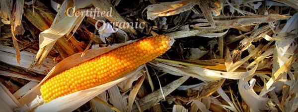 Gallery Image 3-gpf-corn-closeup.jpg
