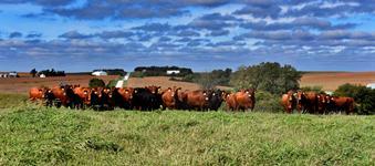 Oak Barn Beef