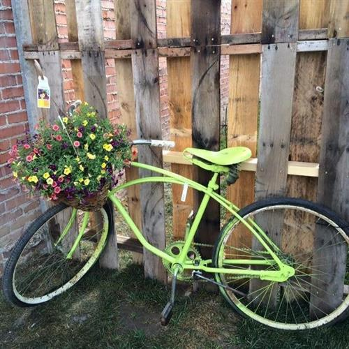 Antique bicycle and plant