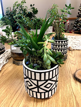 We have succulents!