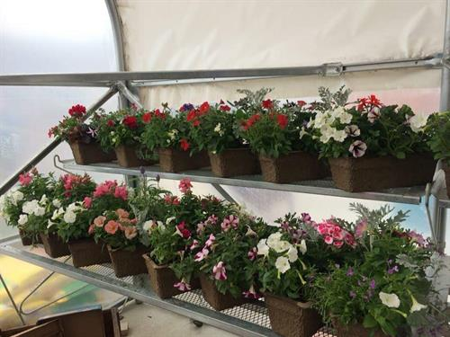 Memorial day planters