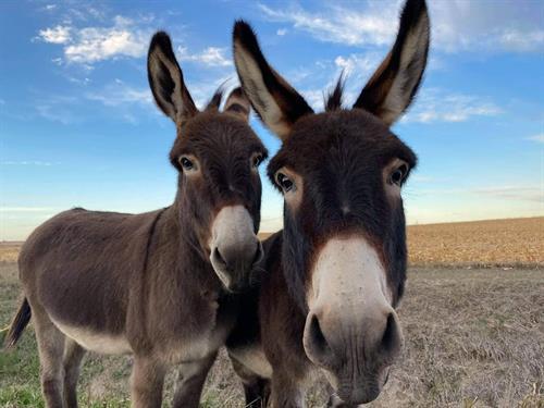 Gallery Image donkeys1.jpg