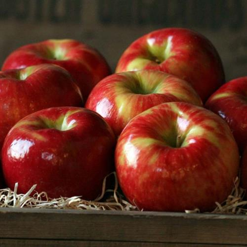Apples go into our Candy Apple Jelly, Caramel Apple Jelly and Apple Jelly