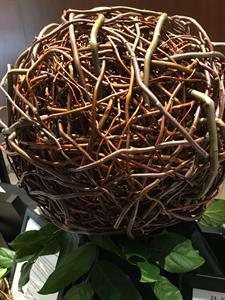 Willow Orb
