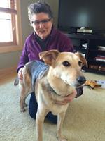 Dorothy receiving TTouch® to help her hip.