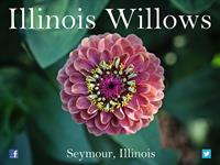 Illinois Willows
