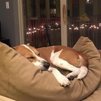 Mack sleeping