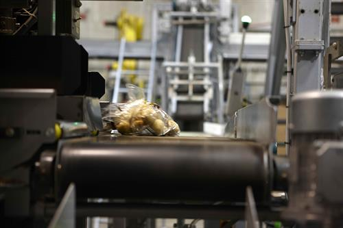 Packing potatoes at Alsum Farms & Produce