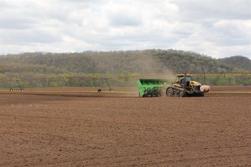 Alsum Farms Planting cut seed potatoes