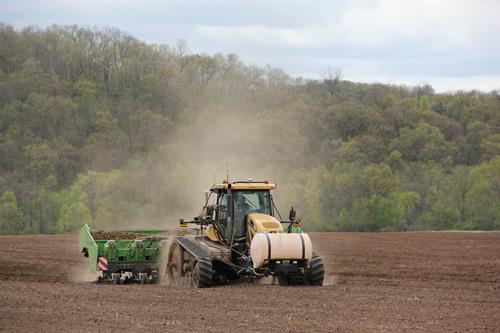 Alsum Farms Planting cut seed potatoes