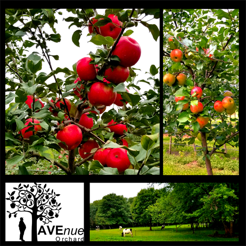 Gallery Image AVEnue_Orchard_PYO.png