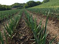 Tamarack Garlic Farm