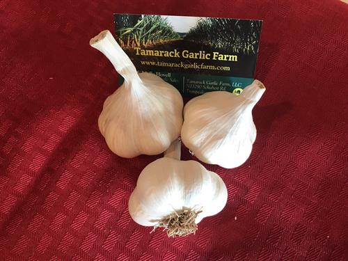 Gourmet Garlic for eating or planting for sale