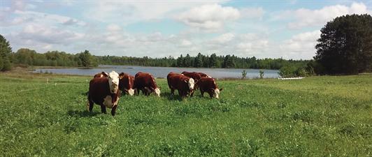 Grass Fed Beef Farm, LLC