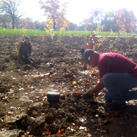 Landmark staff planting at wetland mitigation area at UD Ecology woods.