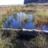 9.6-acre wetland creation for Delaware Coastal Airport expansion in Selbyville, DE