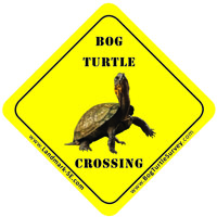 The Bog Turtle is an endangered species that lives in wetland habitat