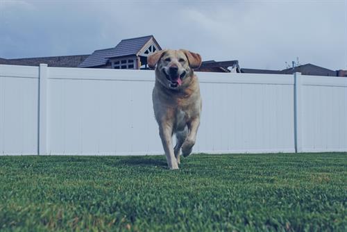 Gallery Image dog-recall.jpg