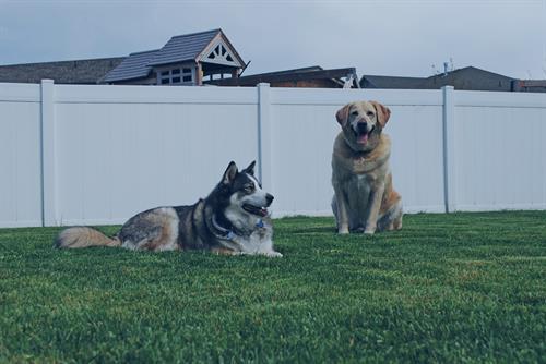 Gallery Image dogs-behaving.jpg