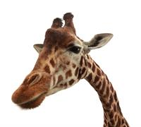 Giraffe Marketing LLC