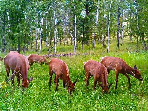 Enjoy beautiful mountain and meadow views. Wildlife abounds on our ten-acre property. Frequent guests include deer, song birds, turkeys, hawks, and chipmunks. Occasionally bald eagles, elk, coyotes, owls, marmots, and fox also visit the property. Yak Ridge is located at an elevation of 5,000 feet providing for cool evenings and star-studded skies.