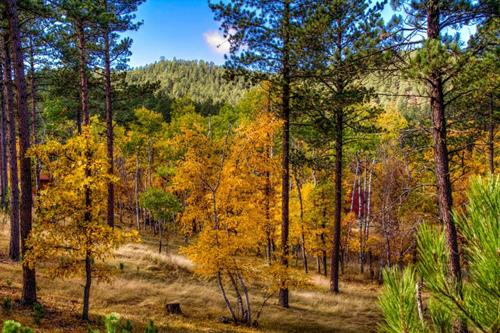 Yak Ridge offers a peaceful 10-acre mountain setting, beautiful every season of the year.