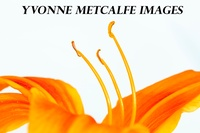 Yvonne Metcalfe Images