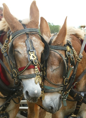 2018 Mule Day and Southern Heritage Festival